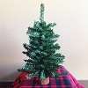 2016 Miniature Canadian Pine Tree, 18