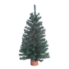 Miniature Canadian Pine Tree, 18